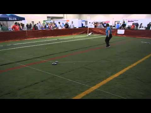 Lure Coursing with a Springer spaniel
