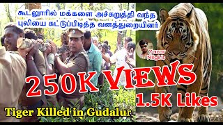 tiger killed in gudalur