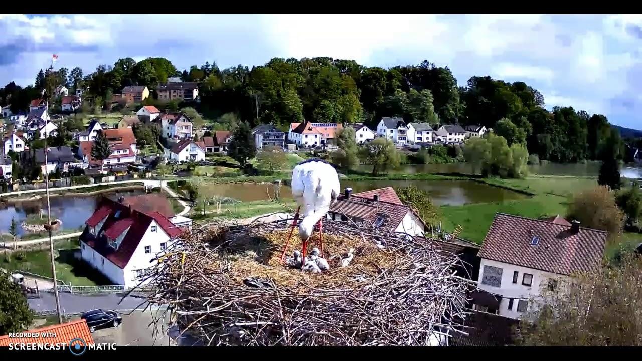 Storchennest Röttenbach