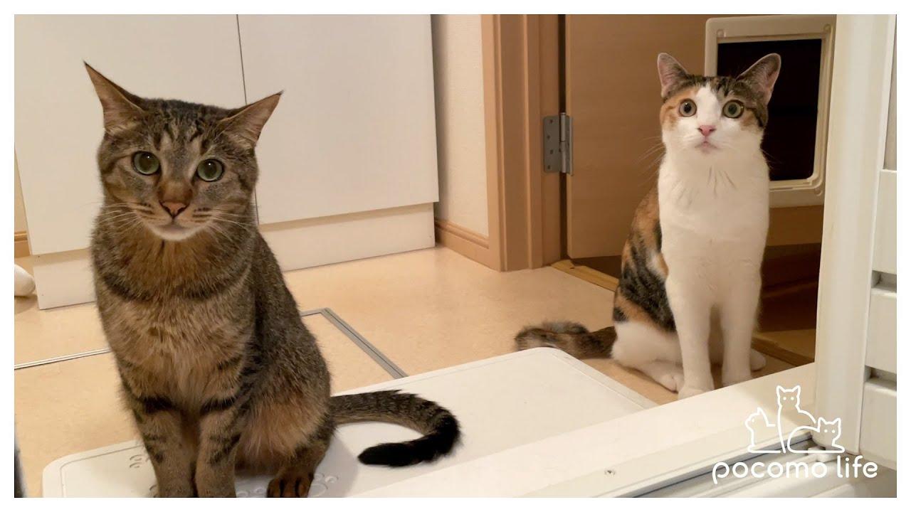 お風呂でびしょ濡れの飼い主が心配でしょうがない猫!