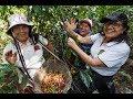 Cafe Femenino - Fair Trade Coffee From Peru