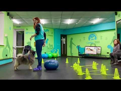 Wolfspitz training