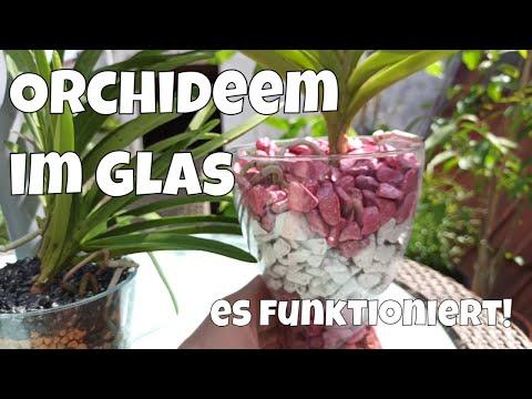 unglaublich-was-er-gemacht-hat,-und-es-funktioniert-auch-noch.-orchideen-glas-colomi-#103