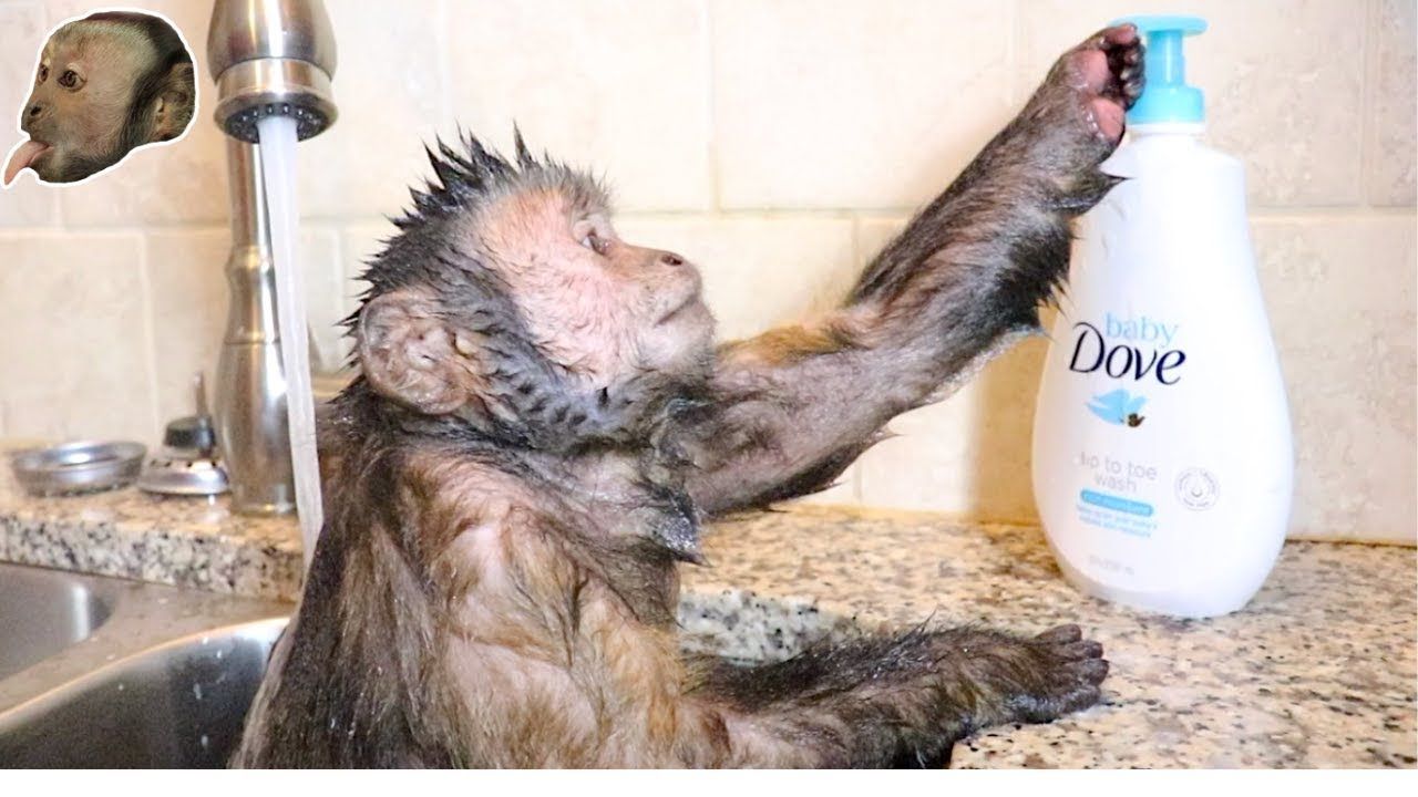 Capuchin Monkey Takes a Hot Relaxing Bath!