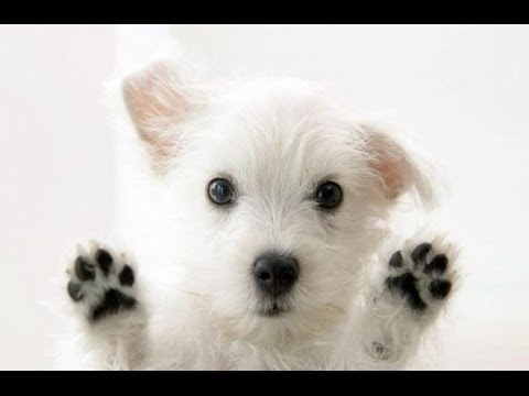 Funny Talking Animals Compilation - Talking Dogs Funny