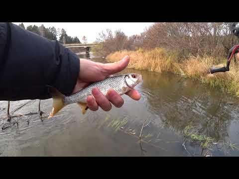 Великолепное утро на рыбалке. (Река рыбная 09.10.17)