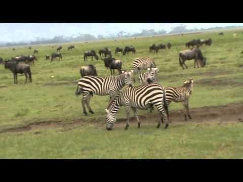 savannas children