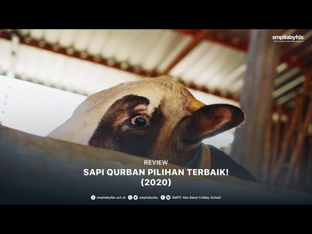 Review – Sapi Qurban Pilihan Terbaik! (2020)