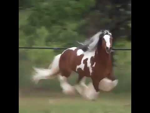 HEBOH !! Penemuan Jenis Kuda Baru
