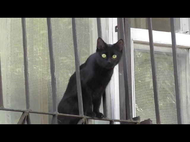 Дом для кота - это тюрьма.  И вот как смотрит заключенный через решетку на волю