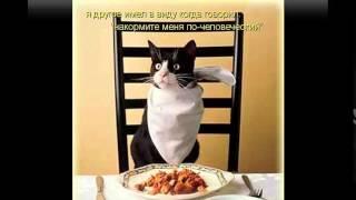 качественный сухой корм для кошек(http://urlid.ru/c17g Лучший Интернет-магазин Enter зоотоваров в рунете. Заходите!, 2014-11-01T11:43:47.000Z)
