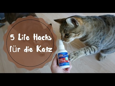 5 katzen hacks wie berliste ich meine katze mit katzenminze youtube. Black Bedroom Furniture Sets. Home Design Ideas