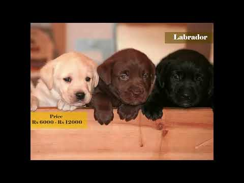 Dog Prices In India 2018 Dog Under Rs 1000 Dog Prices List Rupees