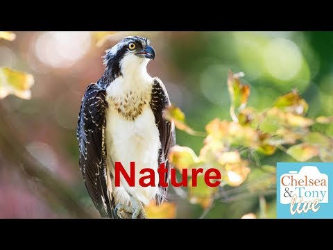 Nature Photography (TC LIVE)