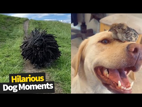 Hilarious Dog Viral Videos | Ultimate Dog Compilation 2020