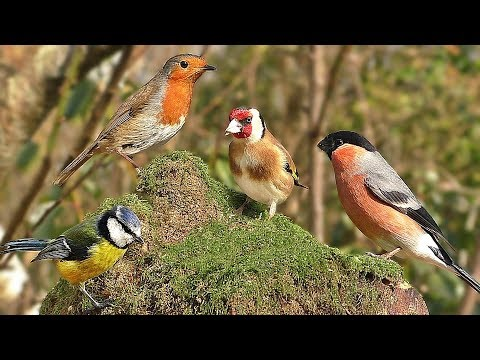 TV for Dogs :  Summer Birds Spectacular - Videos to Calm Your Dog