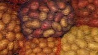 Какие сорта  картофеля выбирать для посадки на участке?