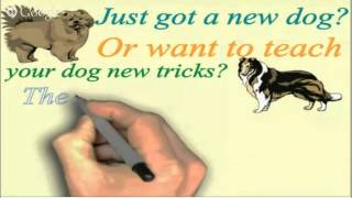 Online Dog Or Puppy Training For Your Doberman Pinscher