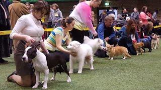 Конкурсы щенков. Выставка Планета собак 2016 (LKBA CACIB)