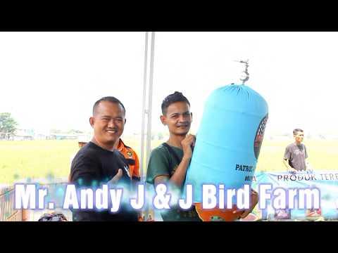 MEDIA HOBI : Aksi Lovebird Repsol milik Bos Andy J&J BF Rubuh di launching ABC berkicau Ronggolawe Mp3