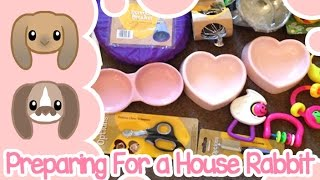 Preparing for a House Rabbit | Peachie Buns