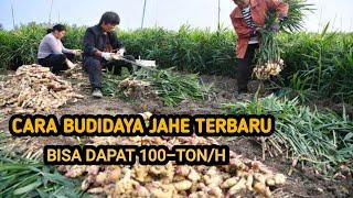 Download lagu BUDIDAYA JAHE METODE TERBARU. HASIL MELIMPAH
