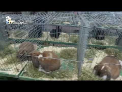 Rammen-, beren- en hanenshow Ons Ideaal