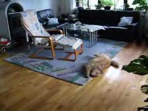 lilly nach dem duschen youtube. Black Bedroom Furniture Sets. Home Design Ideas