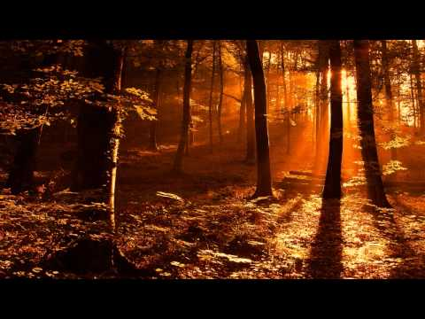 Klaus Schulze - Nostalgic Echo (Concert 1976)