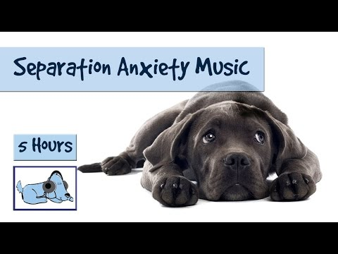 Separation Anxiety Music - Calm your Dogs Anxiety with Relaxing Dog Music!