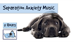 hqdefault - Depression And Anxiety In Dogs