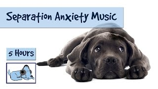 Separation anxiety in dogs is a huge problem for dog owners, and ve...