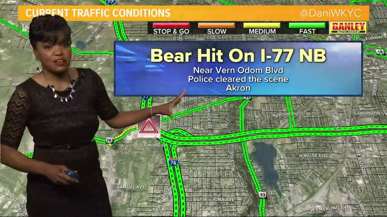 Driver hits bear on I-77 in Akron