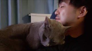スーパーツンデレ灰色猫は二人きりになるとベッタベタに甘えてくる