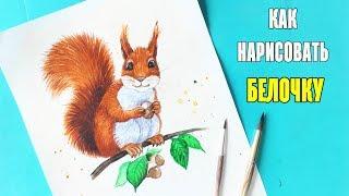 Как нарисовать БЕЛОЧКУ / Рисуем поэтапно белку   Art School