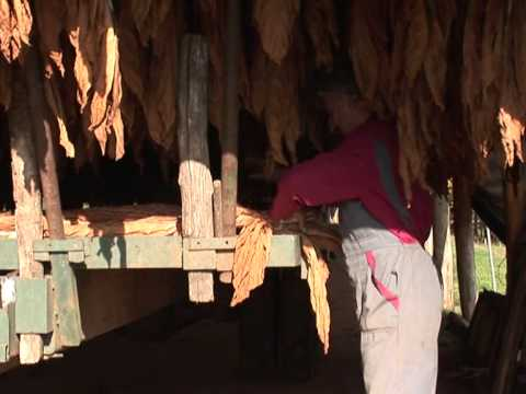 French tobacco farmers on edge over EU subsidies