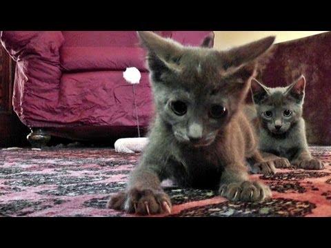 pointy toe kitten heel pumps
