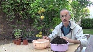 كيفية زراعة بذور النباتات How to grow plants from seed