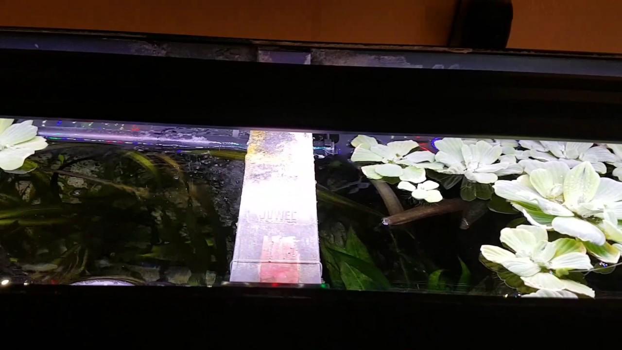 led aquarium beleuchtung juwel rio 240 liter led beleuchtung led lichtbalken tetra. Black Bedroom Furniture Sets. Home Design Ideas