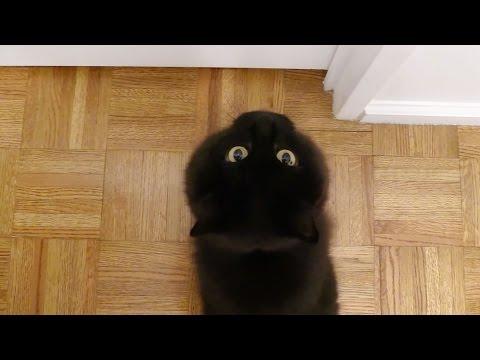 ティッティを呼ぶしおちゃん Theo the cat calls Tiara
