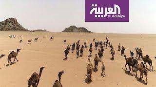 على خطى العرب 5 | نساء من الجزيرة العربية.. البسوس بنت منقذ الجزء (1)