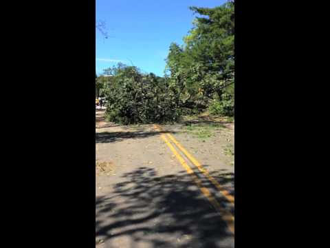 Glen Arbor tree damage following Aug. 2 storm
