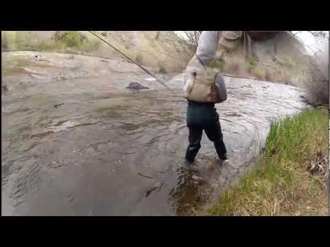 Fishing The Laramie River, Wyoming