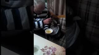 Хозяин кормит своего кота с ложечки)))
