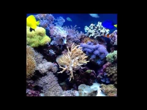 My marine reef tank update 2013.   Trigger fish reef safe new corals re scaped