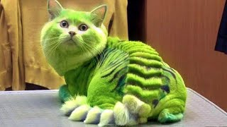 15 Most Dangerous Cat Breeds in the World