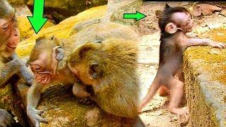 Baby Maci Scare& Terrify, Dee Dee Bite Sherri Make Merri & Maci Break Heart|#Monkey Nightmare