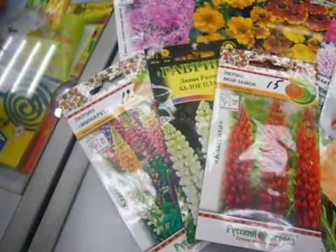 Комнатные растения из семян.