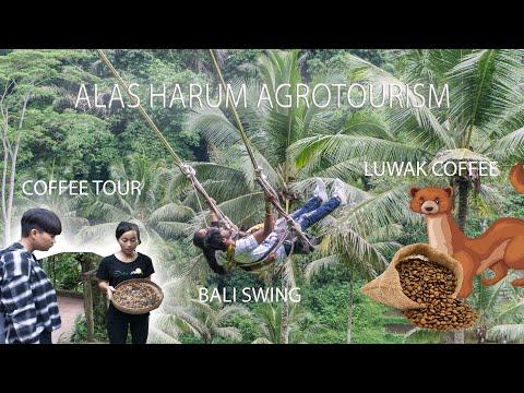 review-alas-harum-agrotourism-bali-/-bali-swing