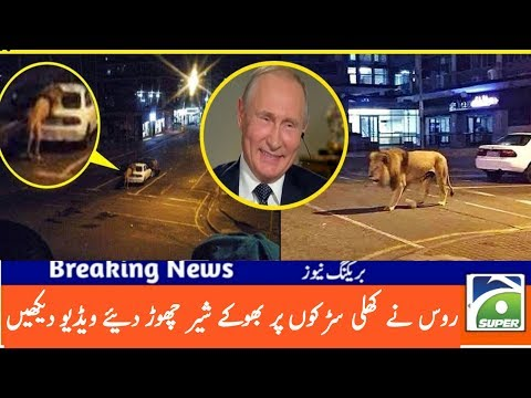 Breaking News: Russia Pm Putting Leaves Many Lion On Road For Lockdown In Russia